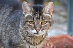 Kitty at La Pergola